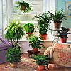 комнатные растения и новорожденный